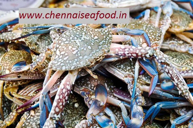 Blue Crab Medium (8-10 pcs per kg)