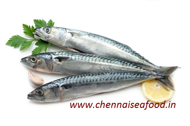Indian Mackeral (Ayilai Meen/Kumla Meen)