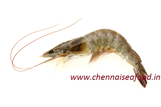 Prawn (Eral) - Medium (Red or White)(60-90 count per KG)