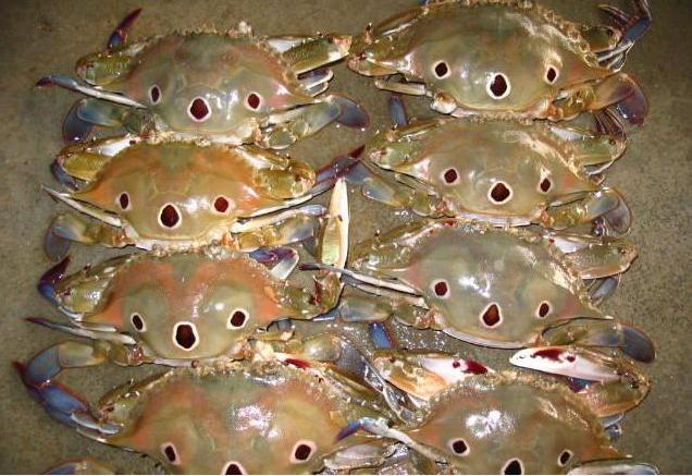 3 Spot Crab Med 8-12 pcs per KG (Mukkan Nandu) - Click Image to Close